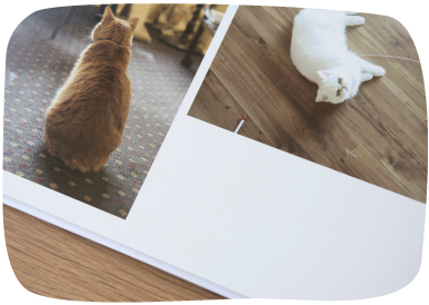 6 Color Printing - Photobook
